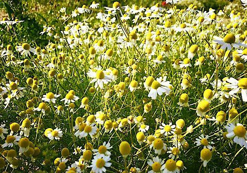 Gelbe Blumenwiese zum Beitrag Digitaler Nachlass